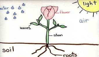 a diagram of a growing flower (flower, leaves, stem, soil, roots, air, sun)