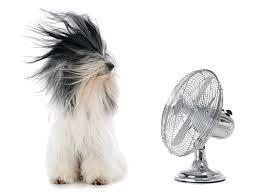 a dog and a fan